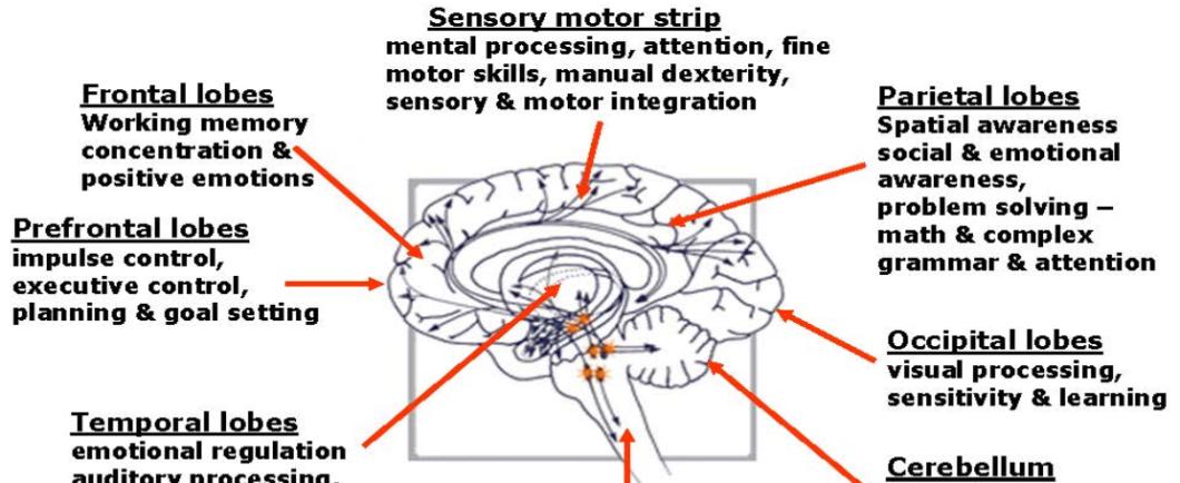 neurofeedback_brain_affects_map_eng