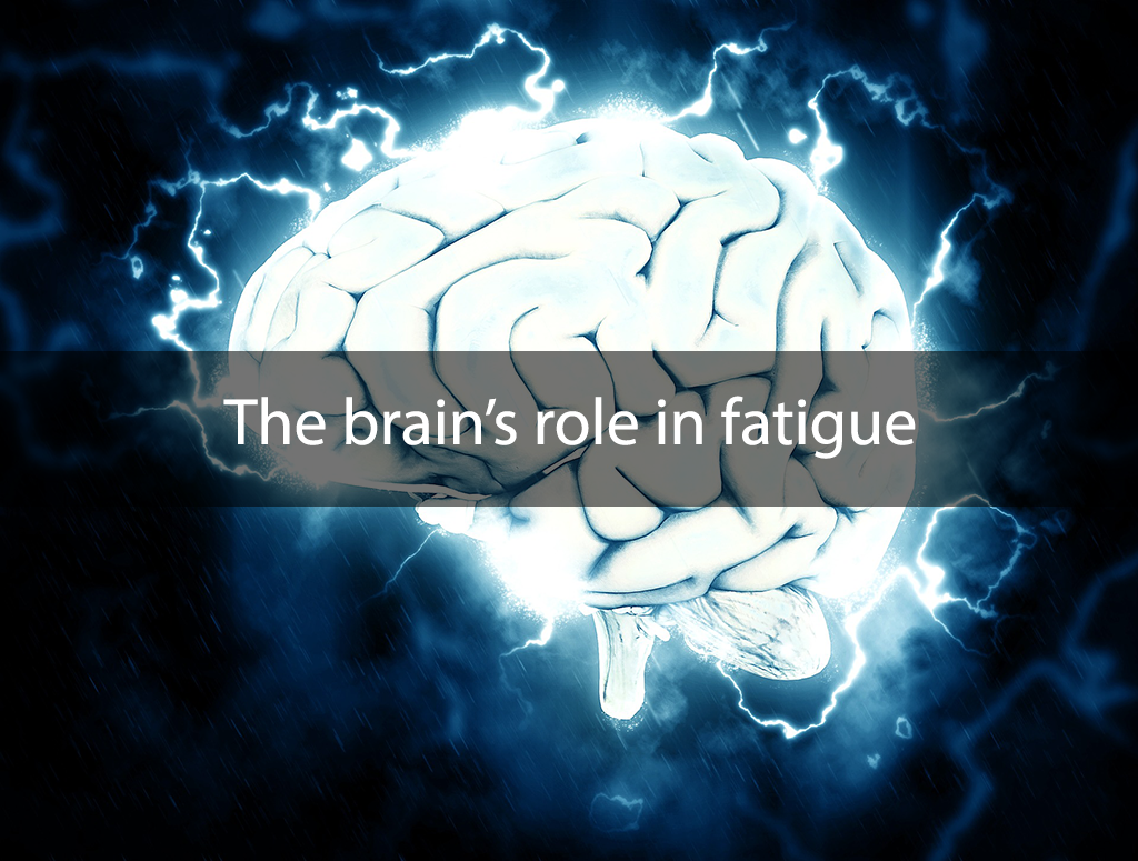 The brain's role in fatigue
